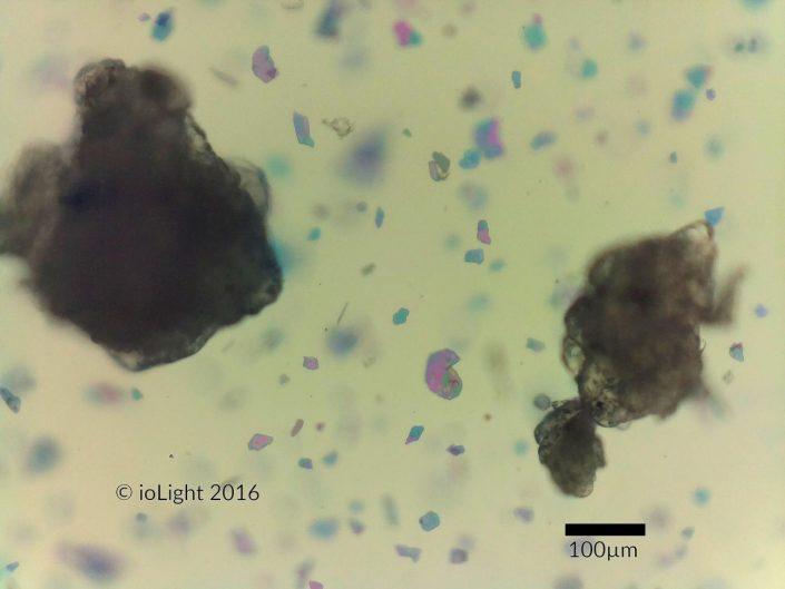 Microscope image of facial scrub