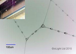 Spiders web digital microscope image
