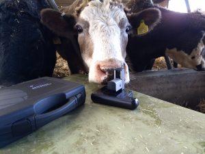 cow microsocpe